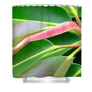 Rubber Tree - New Leaf Shower Curtain