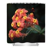 Rubiaceae Shower Curtain