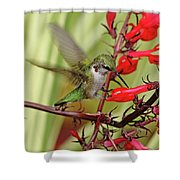 Ruby And Scarlet Shower Curtain