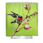 Ruby Garden Hummingbird Shower Curtain
