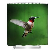 Ruby Red Throated Hummingbird Shower Curtain