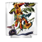 Ruby Throated Humming Bird Audubon Birds Of America 1st Edition 1840 Octavo Plate 253 Shower Curtain