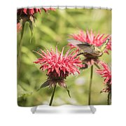 Ruby Throated Hummingbird 1-2015 Shower Curtain