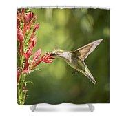 Ruby Throated Hummingbird 2-2015 Shower Curtain