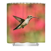 Ruby Throated Hummingbird 2016-6 Shower Curtain