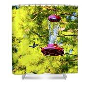 Ruby-throated Hummingbird 3 Shower Curtain