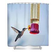 Ruby-throated Hummingbird 4 Shower Curtain