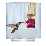 Ruby-throated Hummingbird 5 Shower Curtain