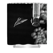 Ruby-throated Hummingbird Bw Shower Curtain