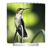 Ruby-throated Hummingbird Shower Curtain by Christina Rollo