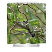 Ruby-throated Hummingbird - Female Shower Curtain