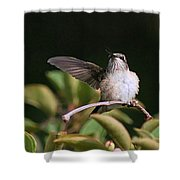 Ruby-throated Hummingbird - Juvenile Shower Curtain
