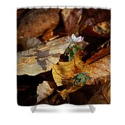 Rue Anemone At Sunrise Shower Curtain