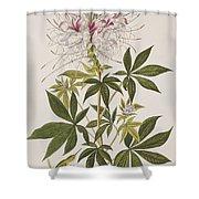 Ruff-necked Hummingbird Shower Curtain