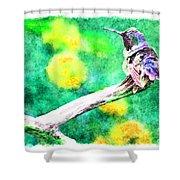 Ruffled Hummingbird - Digital Paint 5 Shower Curtain