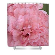 Ruffled Pink Rose Shower Curtain