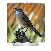 Rufous-backed Robin Shower Curtain