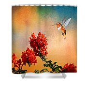 Rufous Dream Shower Curtain