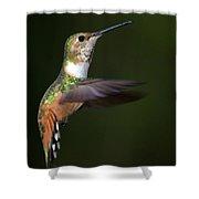 Rufous Hummingbird In Flight Shower Curtain
