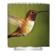 Rufous Hummingbird Shower Curtain