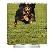 Run Dog Run Shower Curtain