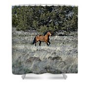 Running Bachelor Stallion Shower Curtain