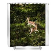 Running Dears Shower Curtain