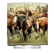 Running Free Horses IIi Shower Curtain