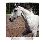 Running Horse Shower Curtain