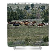 Running Wild Horses  Shower Curtain