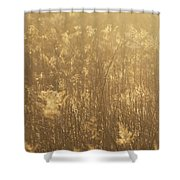 Rural Field At Sunrise Shower Curtain
