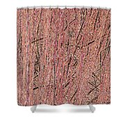 Rushes Shower Curtain by Eikoni Images