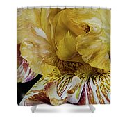Russet And Umber Iris Shower Curtain