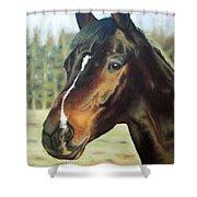 Russian Horse Shower Curtain
