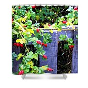 Rustic Fence And Wild Rosehips Shower Curtain