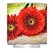 Rustic Red Dasies Shower Curtain