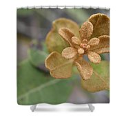 Rusty Lyonia Shower Curtain