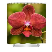 Rusty Orchid Shower Curtain