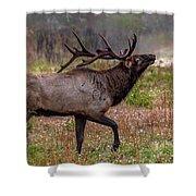 Rutting Bull Shower Curtain