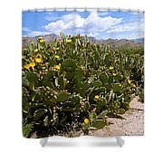Sabino Canyon 3 Shower Curtain