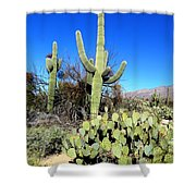 Sabino Canyon Shower Curtain