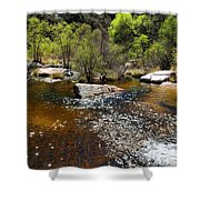 Sabino Creek Shower Curtain