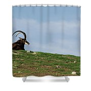 Sable Antelope On Hill Shower Curtain