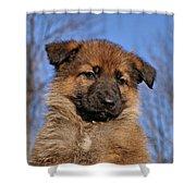 Sable German Shepherd Puppy II Shower Curtain by Sandy Keeton