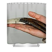Sabor-toothed Tiger Tooth. Shower Curtain