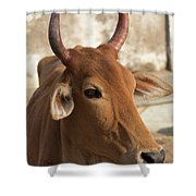 Sacred Cow Shower Curtain