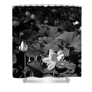 Sacred Lotus #2.    Black And White Shower Curtain