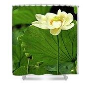 Sacred Lotus In Black Frame Shower Curtain