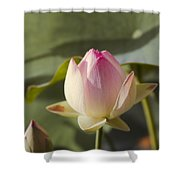 Sacred Lotus - Nelumbo Shower Curtain