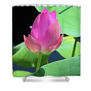 Sacred Pink Shower Curtain